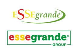 Restyling grafico del Logo